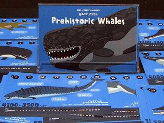 2020クジラの進化カレンダーの画像