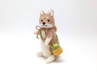 お出かけ柴犬さん(8)の画像