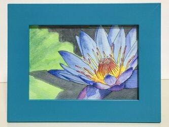 《水彩原画》「スイレン」(額縁付き)の画像