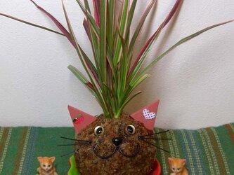ネコ・ねこ・猫の「苔玉こけっぴ」の画像