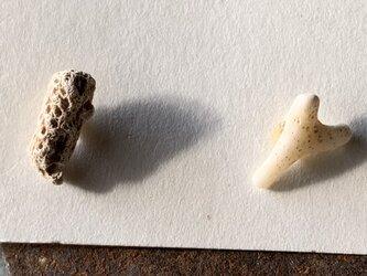 珊瑚のピアスの画像
