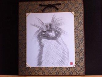 眉が立派なイワトビペンギンの画像