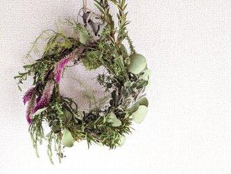 自家栽培ハーブのローズマリーとユーカリとケイトウの深いグリーンリースの画像