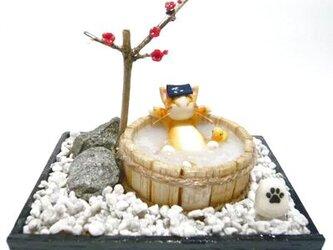 にゃんこのしっぽ〇のんびり梅の湯〇猫湯〇ミニチュア〇ドールハウス〇茶とら白猫の画像