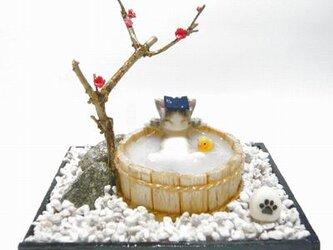 にゃんこのしっぽ〇のんびり梅の湯〇猫湯〇ミニチュア〇ドールハウス〇さばとら白猫の画像