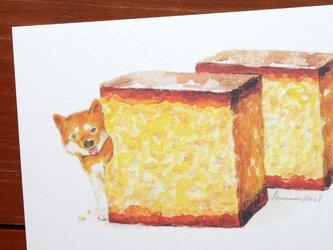 3枚セット★「カステラと柴犬」ポストカードの画像