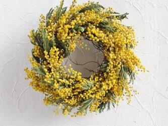 早咲きミモザのドライリースの画像