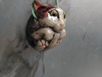 琦  ネコの画像