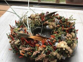 優しくホンワカ・縁起物・極小トウガラシのドライフラワーリースの画像