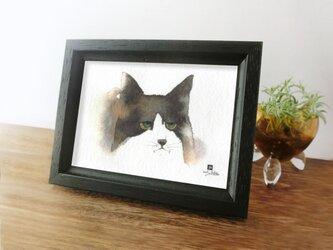 猫 *ハチワレの想い* の画像