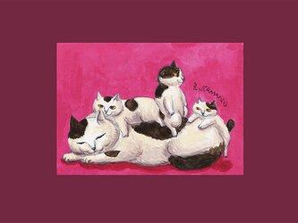 カマノレイコ オリジナル猫ポストカード「三兄弟」2枚セットの画像