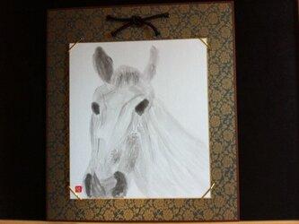 競走する白馬の画像
