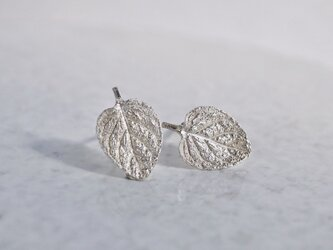 Marjoram stud earrings [EP062SV]の画像