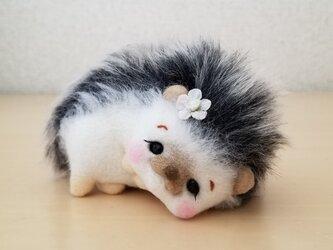 ころんこハリネズミちゃんの画像