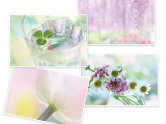 春色ポストカード*4枚セットの画像