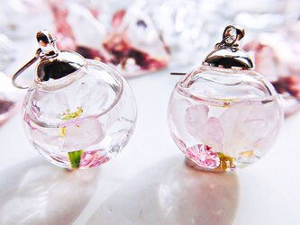 春を告げる桜のガラスドーム spring   ピアス/イヤリング    スワロフスキーの画像