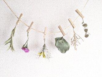自家栽培ハーブのユーカリとスターチスとメラウレカの小さなフラワーガーランドの画像