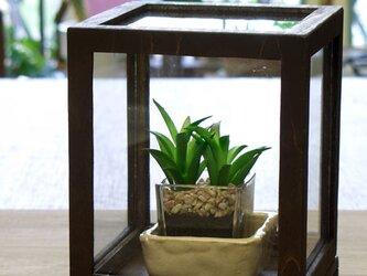 ◆テラリウム、木とガラス、観賞用ケース(S)◆の画像