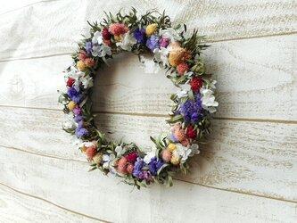 キンポウジュと小さな花の画像