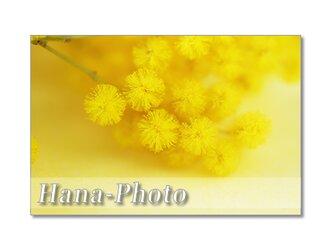1377) 可愛く満開ミモザ    ポストカード5枚組の画像