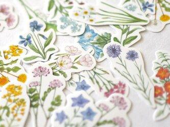 野の花のフレークシールの画像