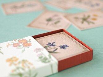野の花の小さな図鑑風メッセージカードBOXの画像