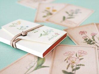ちょっと大きめ*野の花のメッセージカード(専用ケース付き)の画像