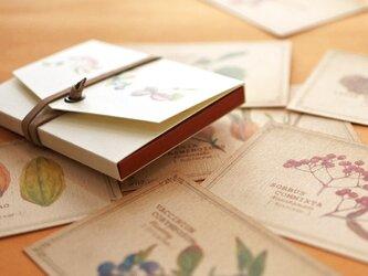 ちょっと大きめ*木の実のメッセージカード(専用ケース付き)の画像