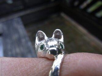 エメラルドの目を持つ犬の画像