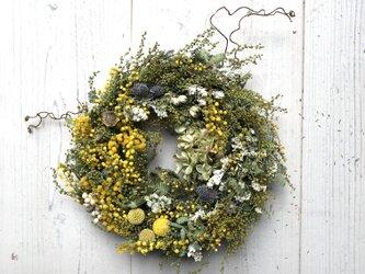 春・優しいミモザのドライフラワーリース2の画像
