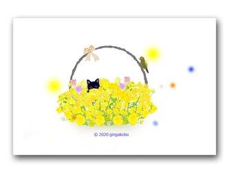 「かくれんぼ」 ほっこり癒しのイラストポストカード2枚組   No.992の画像