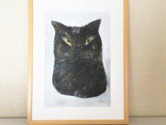 cat1の画像