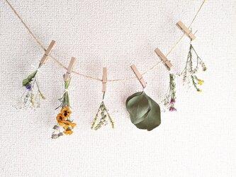 自家栽培ハーブのユーカリとスターチスと春感じるフラワーガーランドの画像
