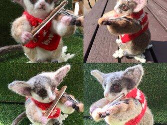ショウガラゴのバイオリニストの画像