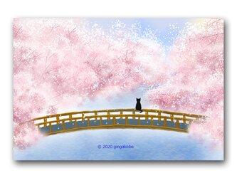 「サクラさん、今年も会えてうれしいな♪」 ほっこり癒しのイラストポストカード2枚組   No.996の画像