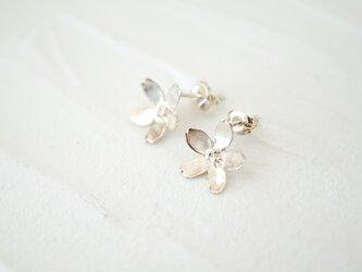 桜 ピアス silverの画像