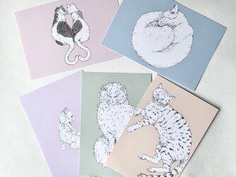 キレイ色 猫のポストカードセット(5枚セット)の画像