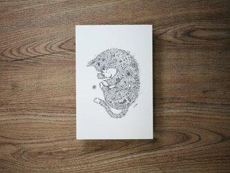 【2枚セット】酒井ひさお「芽吹く」活版印刷のポストカード・グリーティングカード/猫・ネコの画像