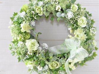 希望のともしび 緑のバラのリース アイビーをそえて:グリーン リボンの画像