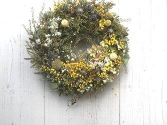 春・優しいミモザのドライフラワーリース3の画像