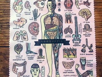 人体模型マナブくん 液晶・メガネ拭きの画像