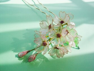 ソメイヨシノ(桜のかんざし)の画像