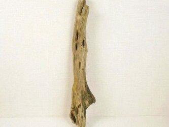 【温泉流木】穴があるなめらかなフォルムの流木 流木素材 インテリア素材 木材の画像