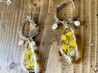 「感謝」「思いやり」の花言葉を持つミモザ&6月誕生石「淡水パール」のフープ・ピアスの画像