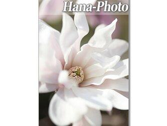 1381) 華やかなモクレン・満天星つつじ・アーモンドの花  ポストカード5枚組の画像