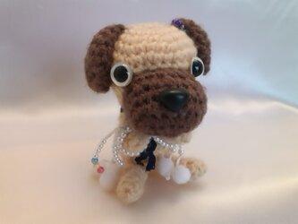 お願いわんちゃん♡パグの人形♡オーダー-かわいい犬の編みぐるみMの画像