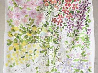 コットンシルクスカーフ「clematis garden」の画像