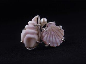 美しい貝(人魚姫)の画像