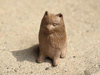 犬(ポメラニアン)の画像