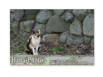 1385) 猫  ポストカード5枚セットの画像